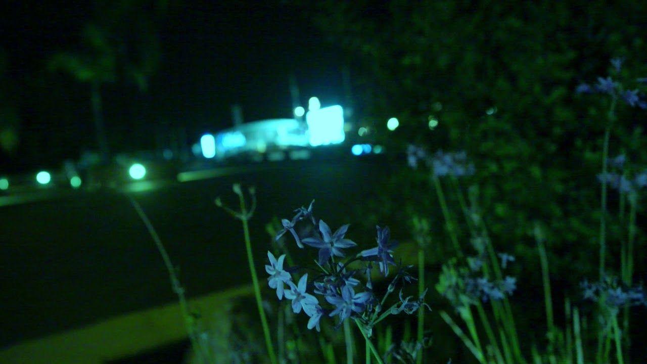 La Nuit Verte  (JVC GY LS 300 J Log)