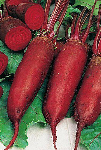Seeds Radish Purple Rare 20 Days Vegetable Planting Organic Heirloom Ukraine