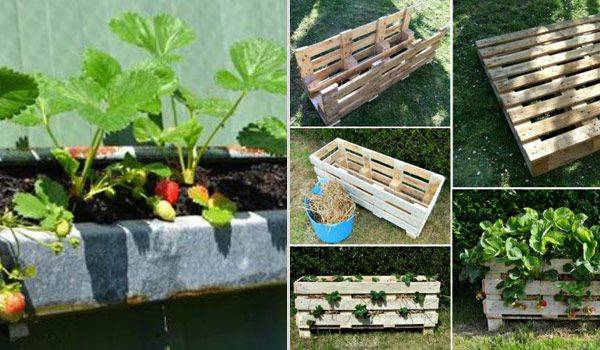 Creative DIY Ideas For Growing Strawberries On Small Garden Or Yard