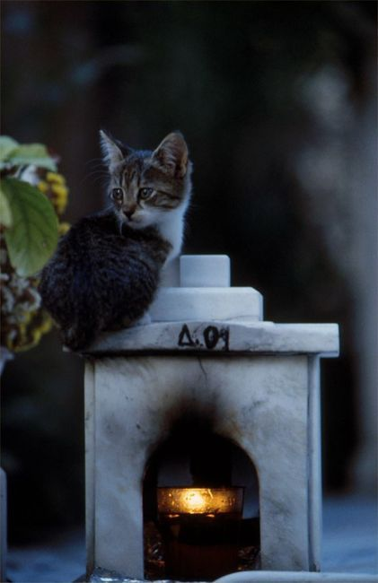 .another cemetery cat