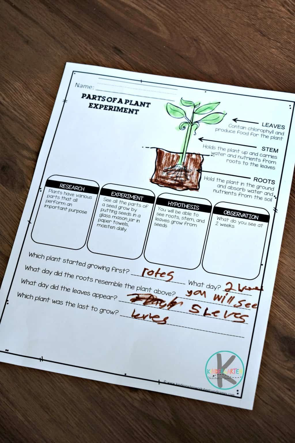 Food Coloring Flower Experiment Worksheet Parts Of A Plant