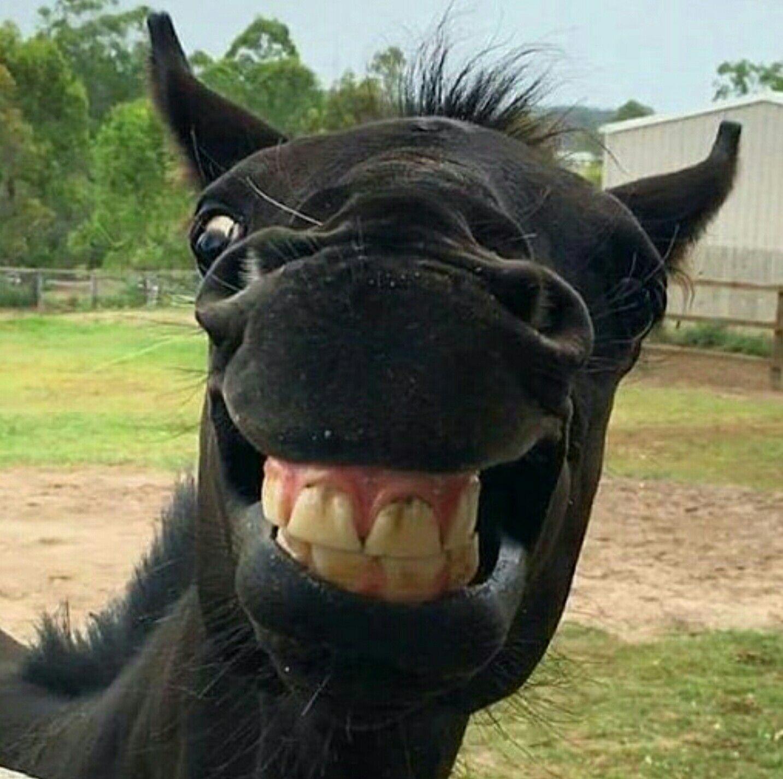 Pin Von Danielle Volbeda Auf Animals Lachende Tiere Tiere Lustige Pferde