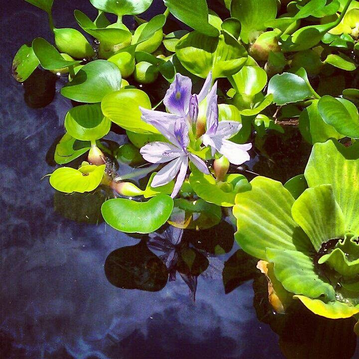 """""""The evening was all in grays and purples, the ancient oaks throwing lace shadows across the silver stretch of lawn...She wandered in the shelter of the shadows, and finally found a bench beside a koi pond. It was the loveliest thing she'd seen in over a year. The peace of it was drugging."""""""