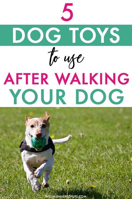 Interactive Dog Toys The Top 5 Interactive Dog Toys To Use After A Walk - Well Mannered Pups