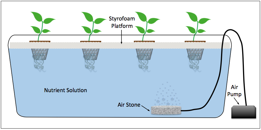 Diagram Of A Deep Water Culture Dwc Hydroponic System Gardening
