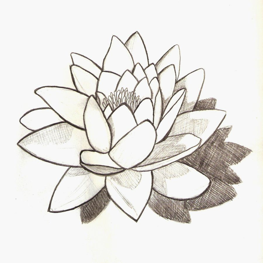 Water Lily By Josephinecarlile On Deviantart Water Lily Tattoos Flower Tattoo Drawings Lily Tattoo Design