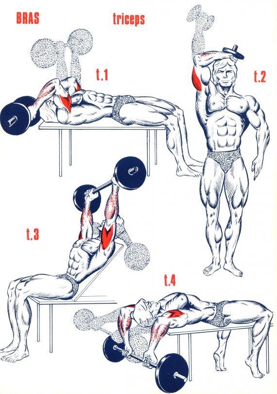 Triceps … Plus Musculation Bras 3acead66068