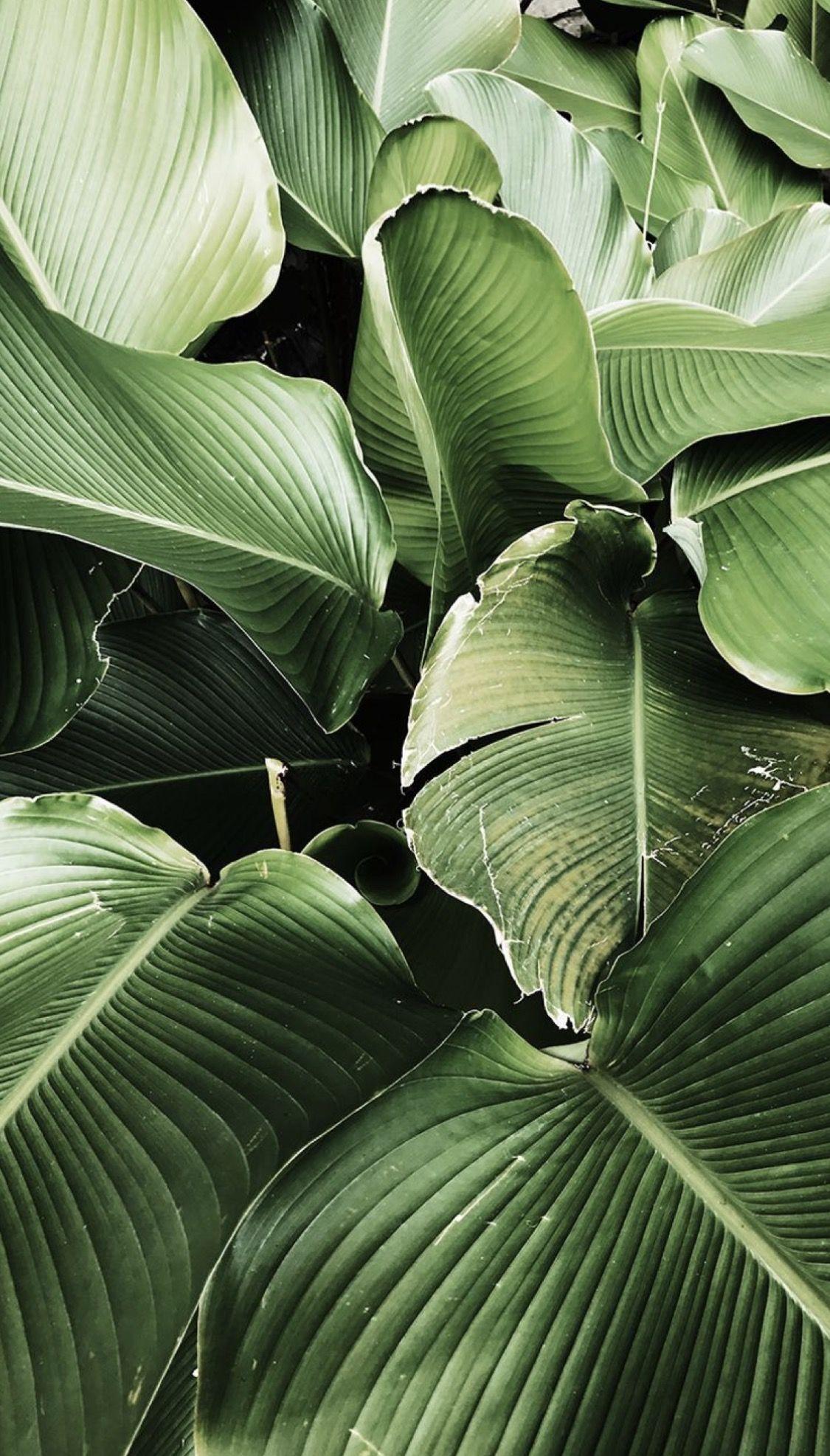 Pinterest Misshrenae Plant Wallpaper Landscape Wallpaper