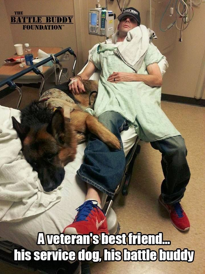 Battle Buddy............. A highly trained service dog