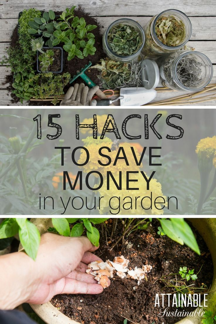 Gardening Tips To Save You Time And Money Try These Hacks