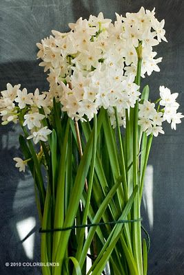 Holiday Home Series Fragrant Flowers Paperwhites Flowers