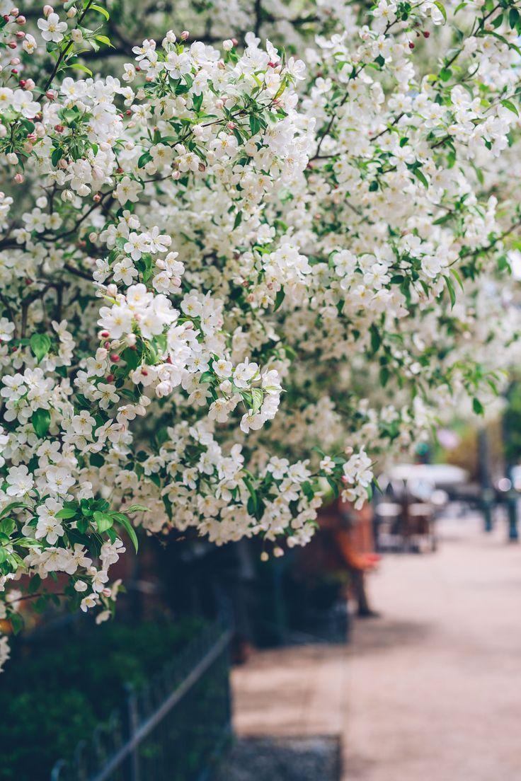 aspen colorado in the spring
