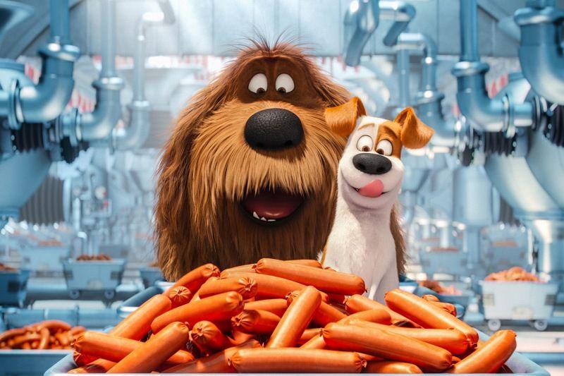 Primetime Emmy Award Winners Louis C K Quot Louie Quot Quot Parks Amp Amp Recreation Quot And Eric Stonest Secret Life Of Pets Pets Movie Secret Life