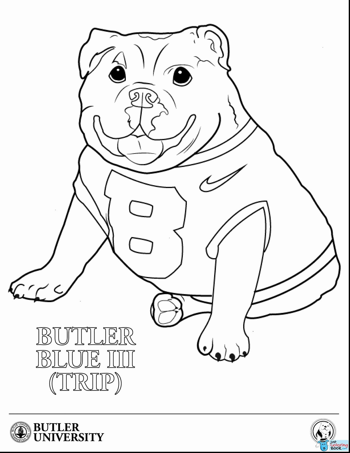English Bulldog Coloring Pages Free French Puppy American