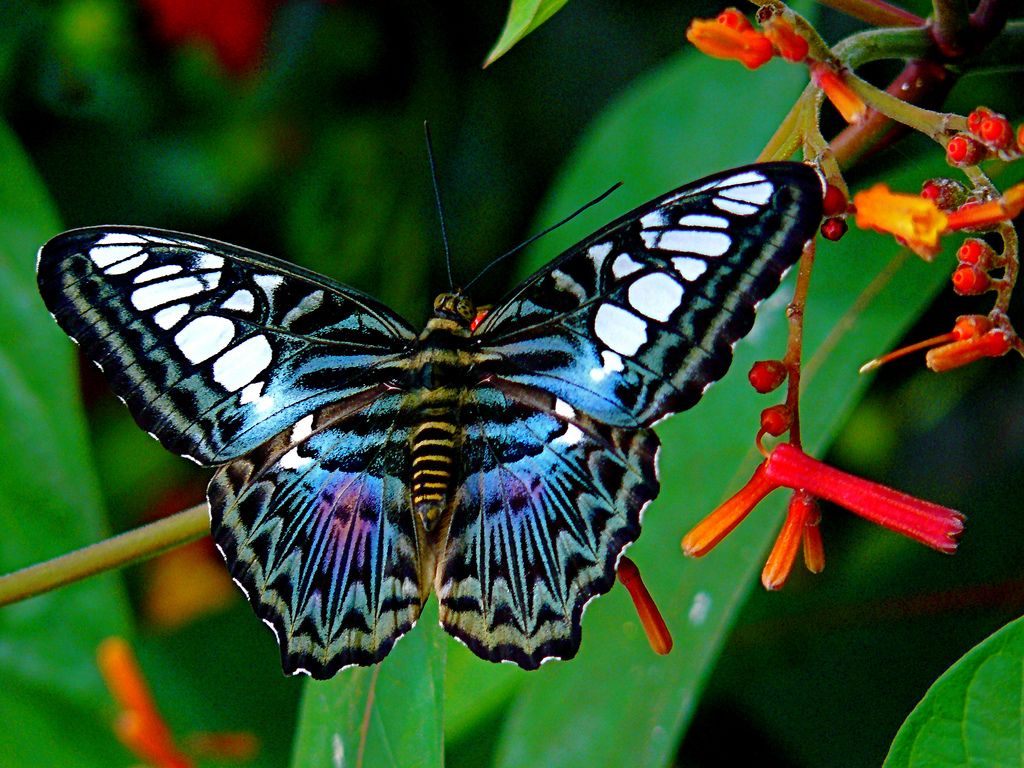 Top 10 Most Beautiful Butterflies In The World.Butterflies