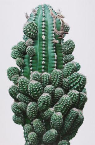 cactus del AMOR !