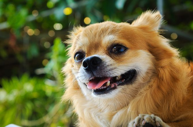 Mouth Problems in Dogs