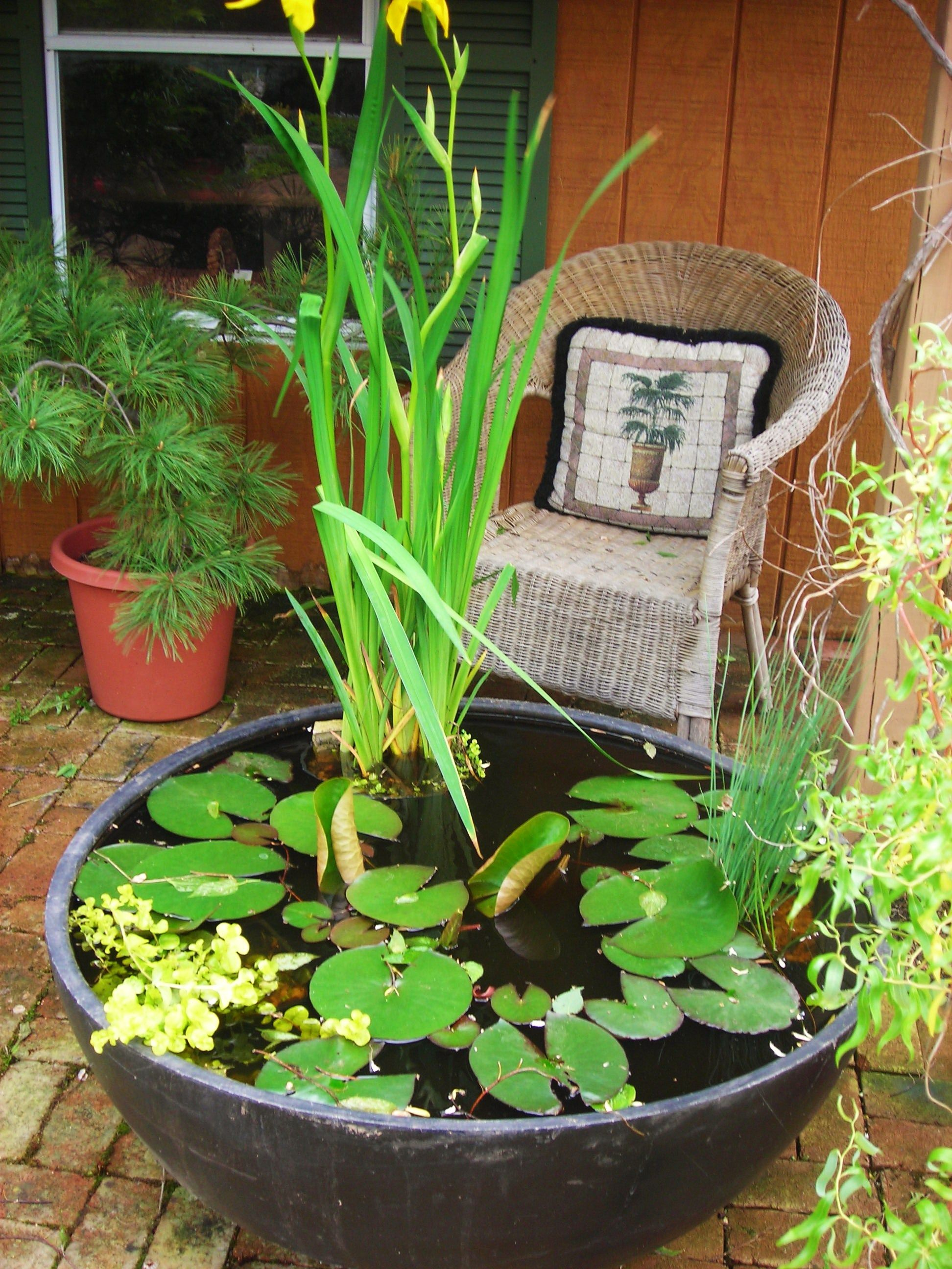 Water Gardens: We Made This Water Garden In A Large Plastic Pot