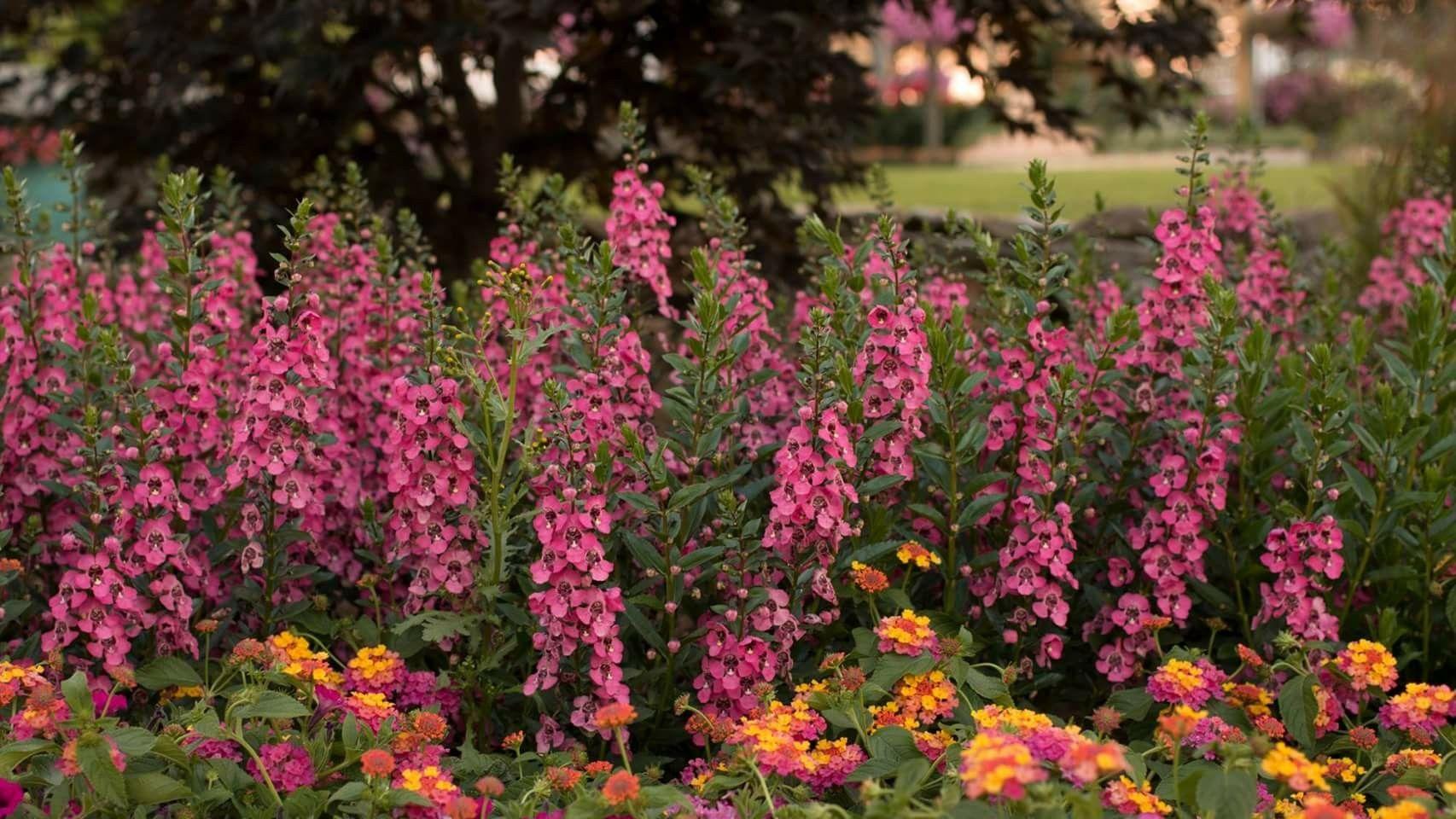 Pin by Brook Albright on GARDEN | Pinterest | Gardens
