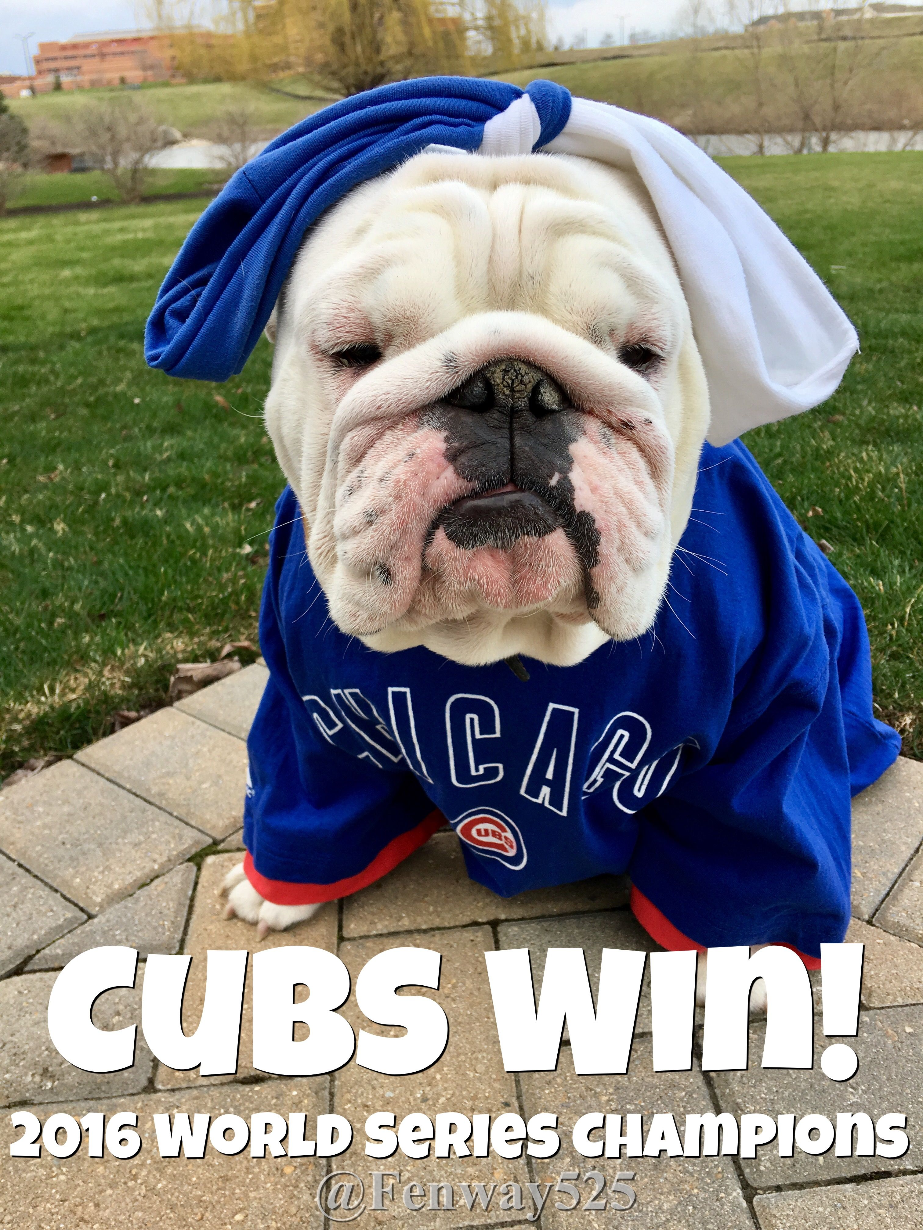 03nov16 Lola Bulldogs Chicago Cubs Baseball World Series