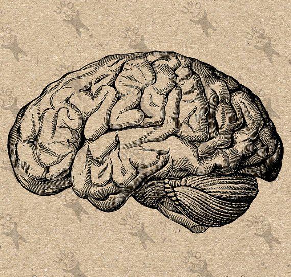 Vintage anatomiques cerveau Clip Art Design transfert par UnoPrint