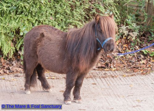 Pippin3 | Equines in Rescue | Horses, Animals, Pony