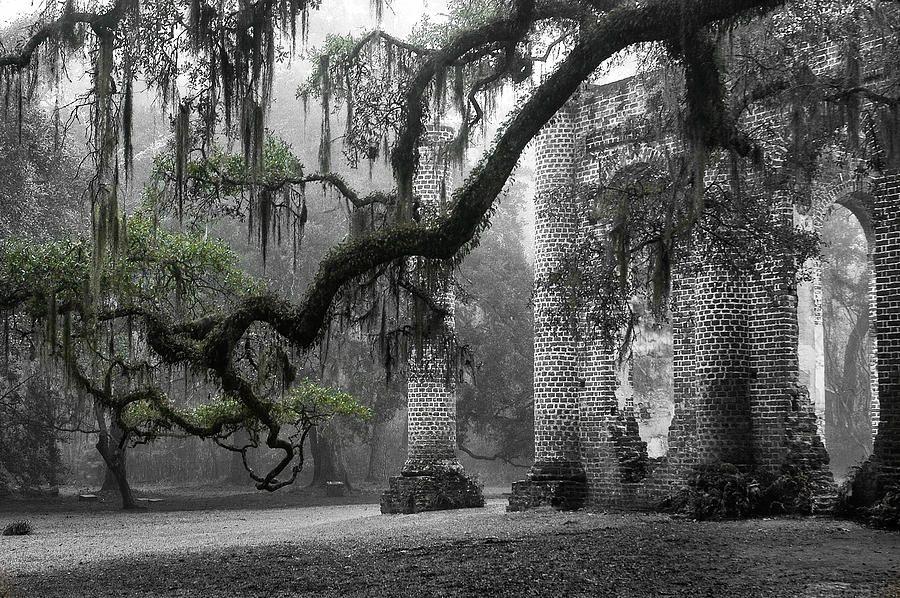 Oak Limb at Old Sheldon Church by Scott Hansen Most
