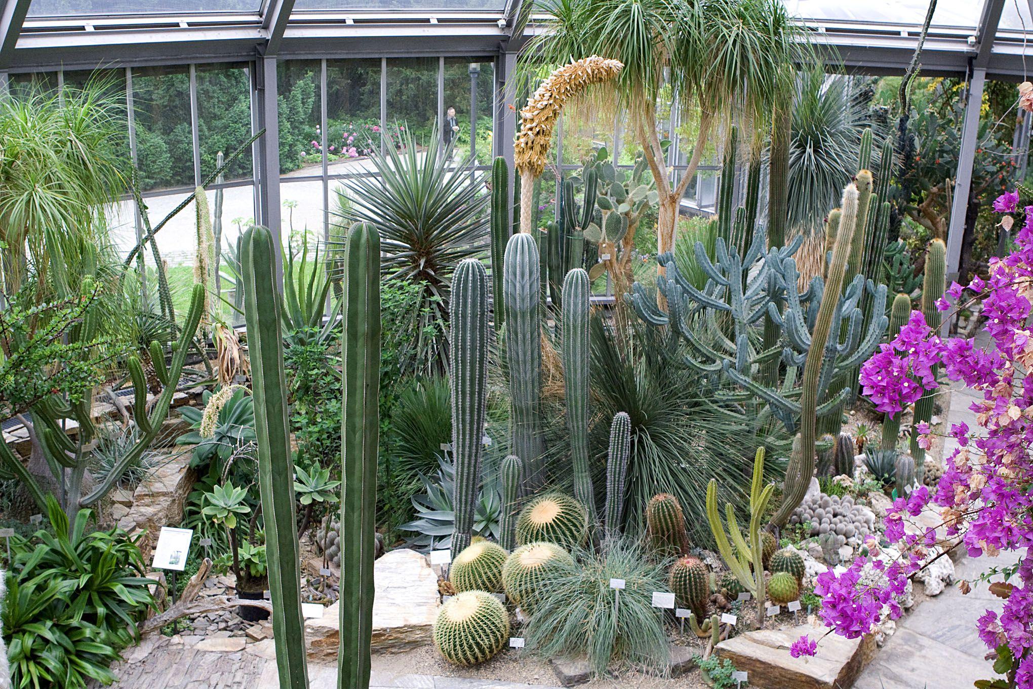 Berlin Dahlem Botanical Garden And Botanical Museum Berlin Germany Botanical Gardens Berlin Plants