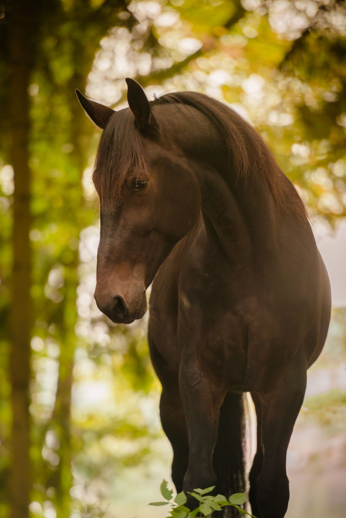 Pferdefotografie Hundefotografie Einzigartige Pferdefotos