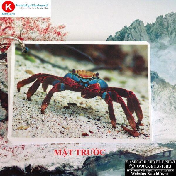 Mặt trước Flashcard tiếng Nhật size lớn 9x13 - Con vật
