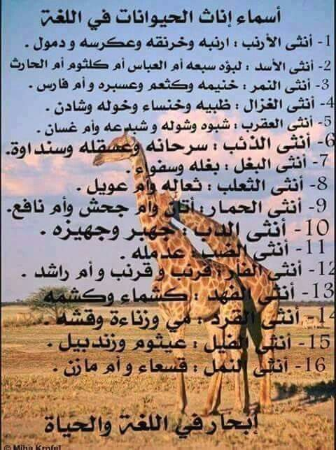 Pin By Emad Gerges On Arab Learn Arabic Language Learning Arabic Arabic Language
