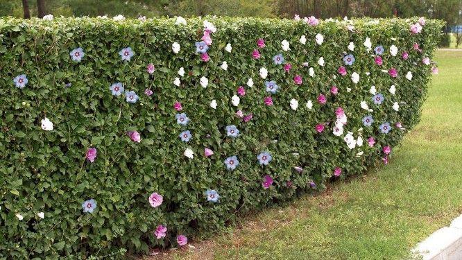 10 haies de jardin pour vous séparer de votre voisin | Gardens