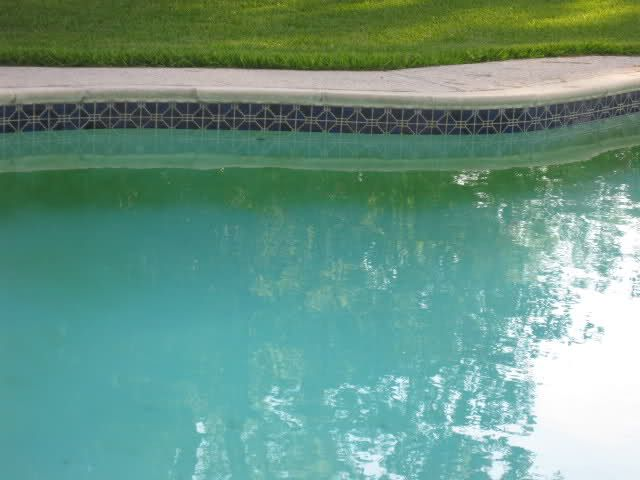 How To Get Rid Of Mustard Algae In A Pool Pool Cleaning Tips Pool Cleaning Swimming Pool Maintenance