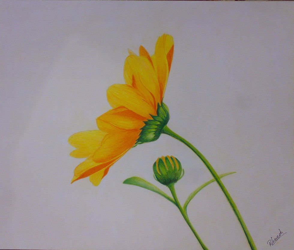 Easy Colour Pencil Drawings Easy Flower Drawings With Color