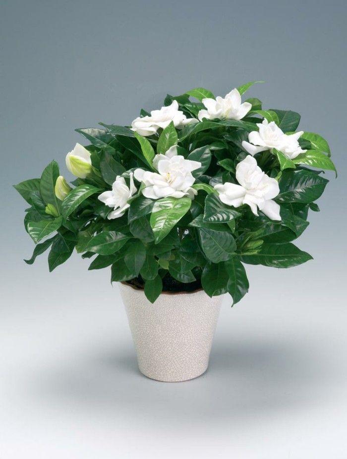 blumen verschenken topfpflanzen blumen valentinstag - Blumen Im Topf Pflanzen