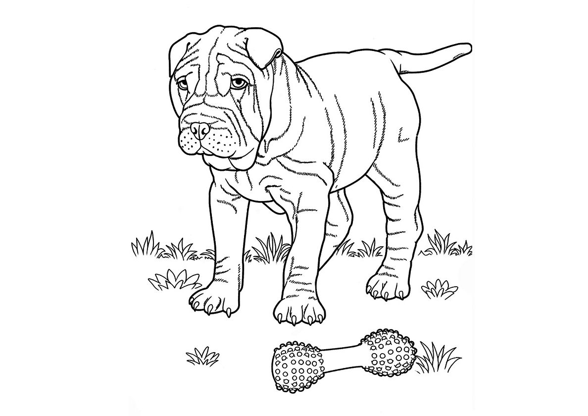 Walking Thoughtfull Shar Pei In 2020 Puppy Coloring Pages Free
