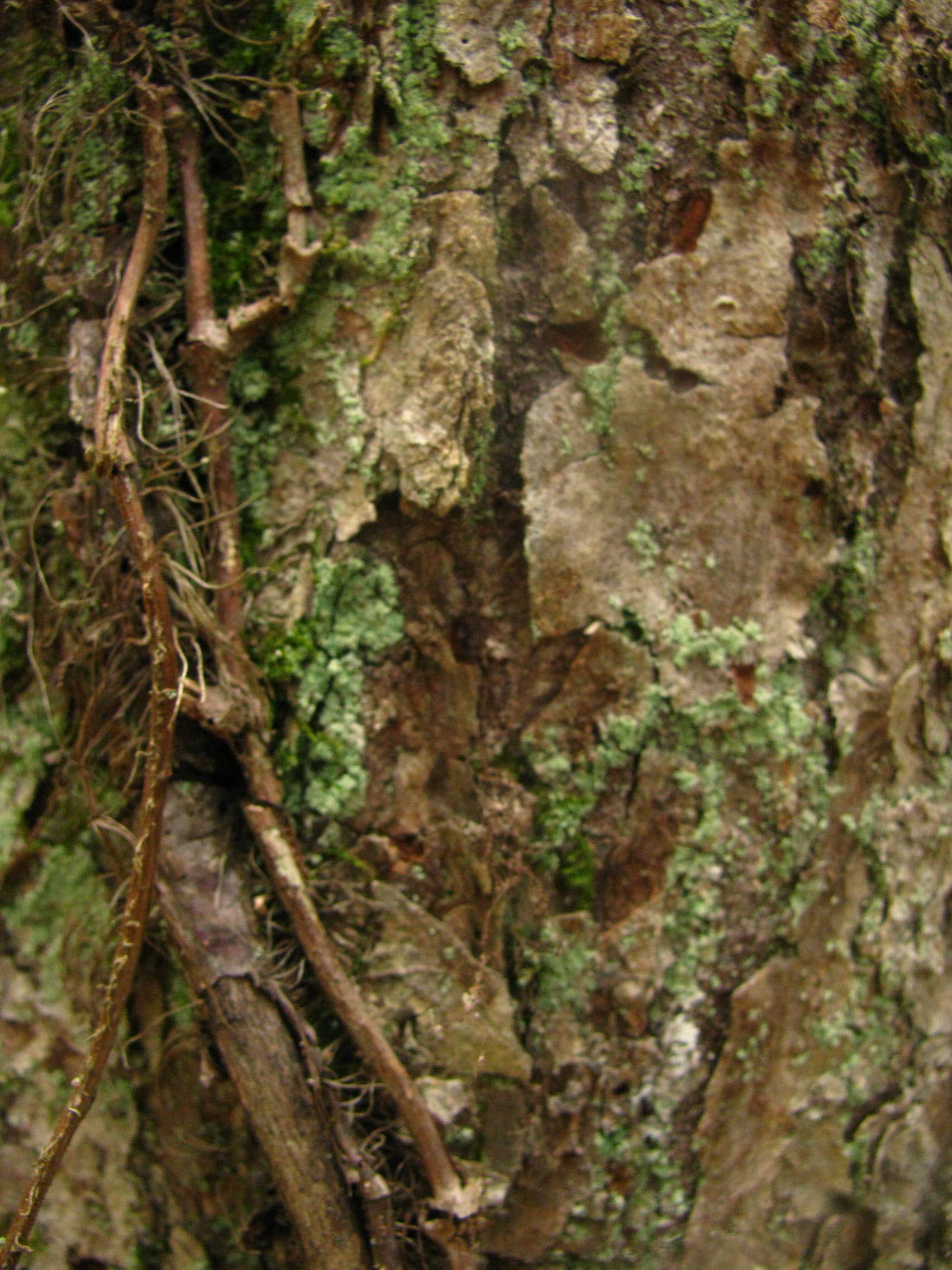 tree. vines