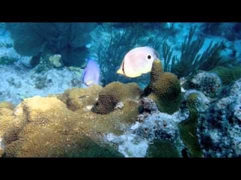 Key West Western Dry Rocks Reef Buoy 5 1996 Key West St Croix Florida Keys