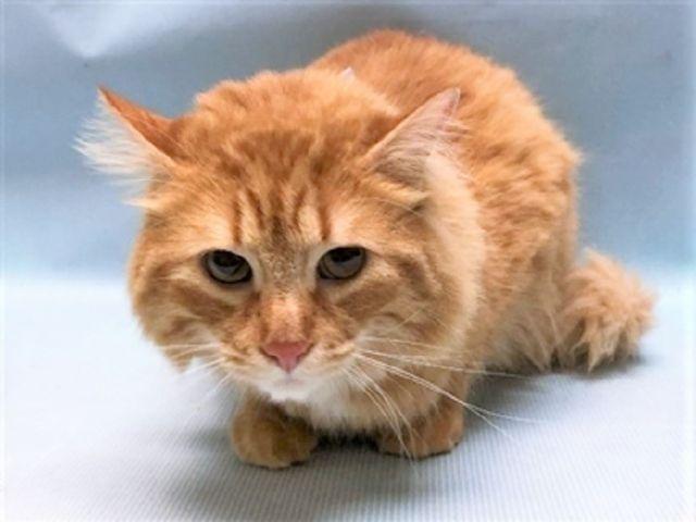 COREY 34414 (With images) Cat adoption, Animals