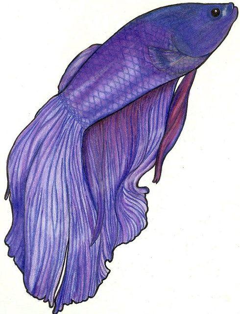 Purple Betta Drawing - MidnightTango27 © 2014 - Jan 24 ... Betta Fish Drawings