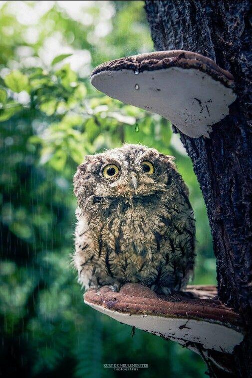 Oh crap it's raining again!