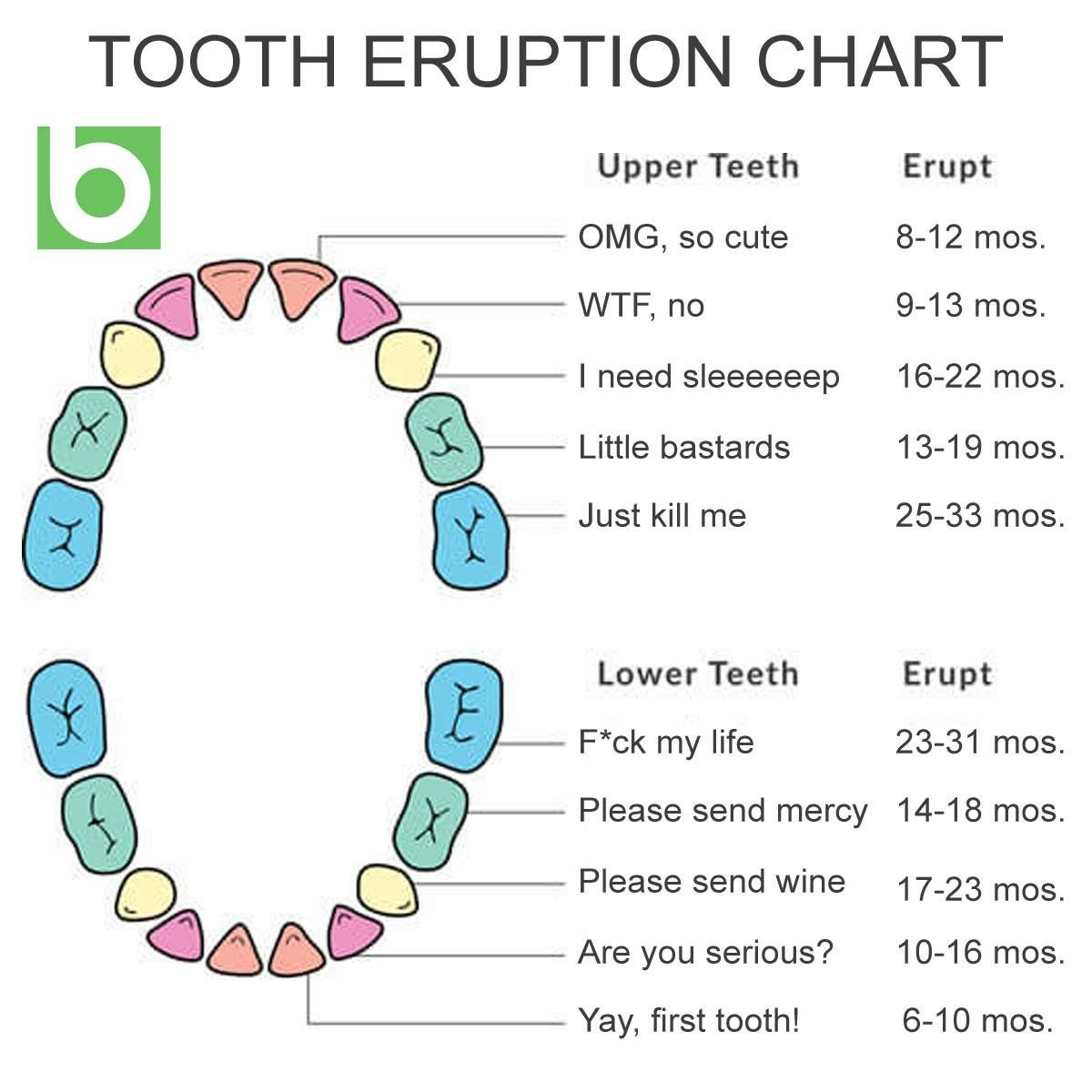 Realistic tooth eruption chart funny pinterest baby baby