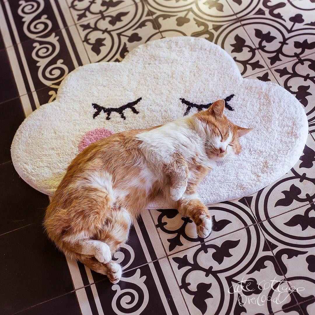 Die Rote Katze macht ein Mittagsschläfle auf dem