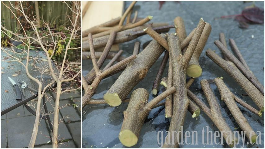 Bring The Outdoors In With This DIY Natural Branch Coat Rack Coat Simple Tree Branch Coat Rack Diy