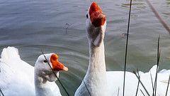 Les  stages d'initiation à la préparation du foie gras, tous les ans de novembre à mars.