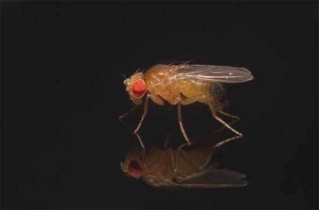 Experiment: Schalter ein, Fliege schläft - science.ORF.at