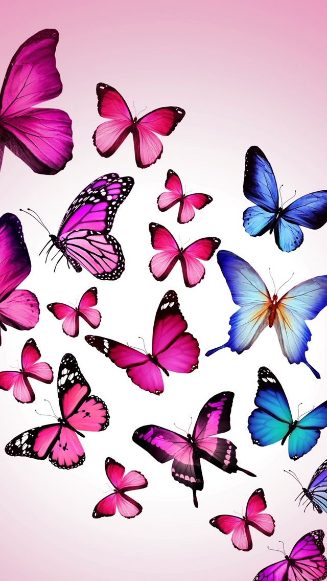 Butterfly Drawing Flying Colorful Background Pink iPhone