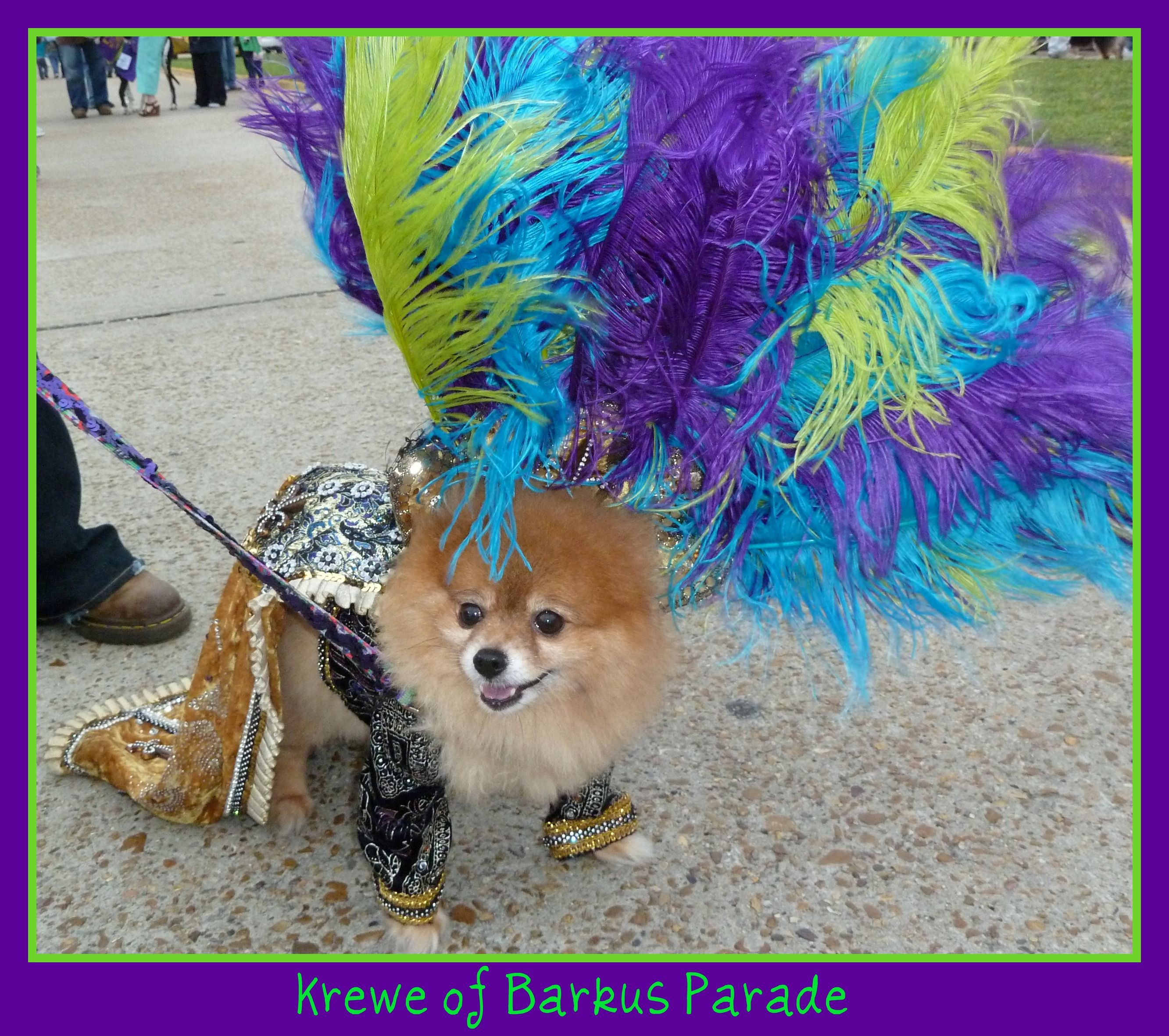 I Want This Pup I Love Him Krewe Of Barkus This Is One Grand
