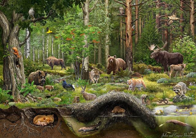 Siberian Taiga Julia Porotov Animal Art Animals Nature