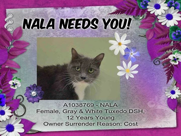 NALA is SAFE!!! Saved by Hurricane Pets Rescue!!!